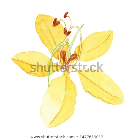 Cassia fistula flower Stock photo © mady70