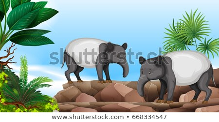два · зоопарке · иллюстрация · природы · фон · искусства - Сток-фото © bluering