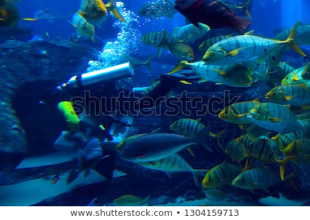 diver with Norwegian fish Stock photo © svetography