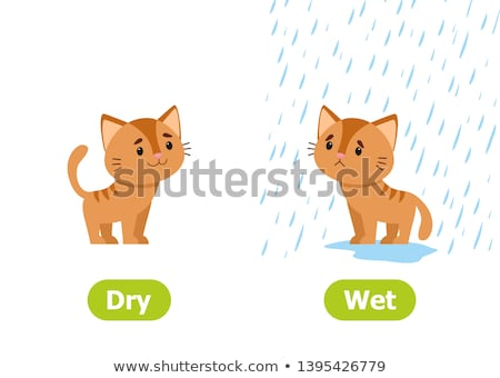 Opposite words for dry and wet Stock photo © bluering