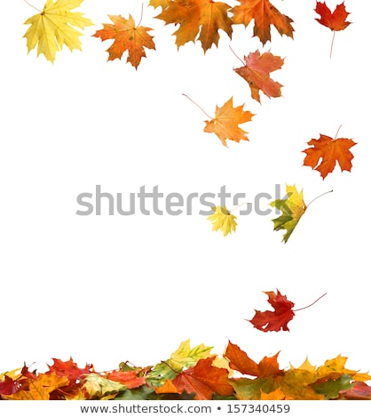 golden frame with autumn leaves stock photo © kostins