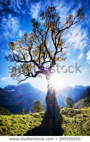 autumn colorful trees on mountainside Stock photo © wildman