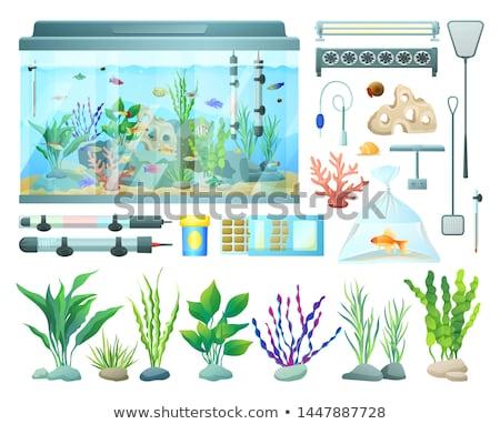 corail · poissons · ensemble · eau · visage · nature - photo stock © robuart