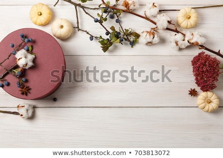 Top view composition with pumpkin, cotton plant flower branches, stock photo © artsvitlyna