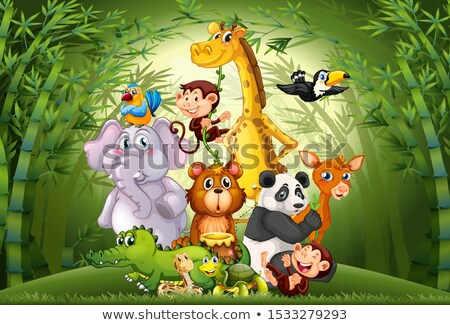 scene with monkeys in the bamboo forest stock photo © colematt