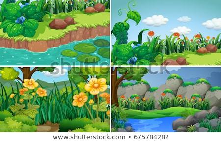 Photo stock: Quatre · fleurs · jardin · illustration · printemps · paysage