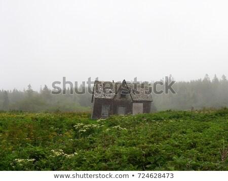 Kisértetjárta ház sziget illusztráció tájkép otthon Stock fotó © colematt