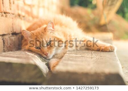 Cute faul rot Katze Spaß entspannen Stock foto © dariazu