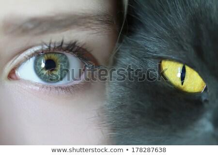 человека животного глаза дизайна золото цвета Сток-фото © adrian_n