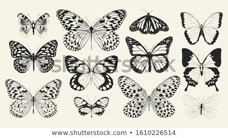 Papillon bleu séance feuille verte nature été Photo stock © Calek