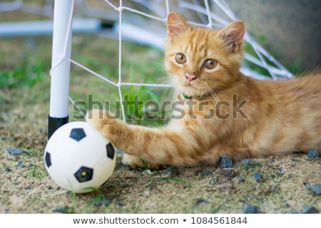 Cat and soccer ball Stock photo © Shevlad