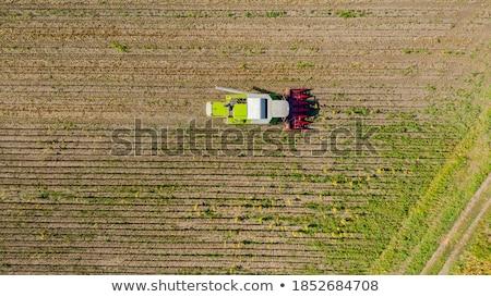 Harvester reaps sunflowers Stock photo © deyangeorgiev
