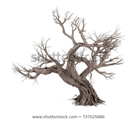Toter Baum Zweig Eisen Draht Himmel Baum Stock foto © jaylopez