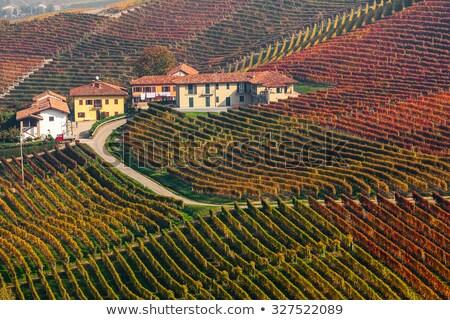 Road among vineyards. Piedmont, Italy. Stock photo © rglinsky77