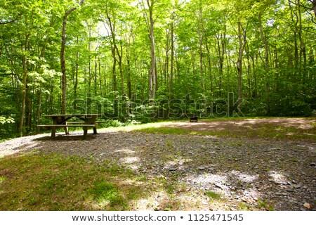 hely · piknik · piknik · asztal · tökéletes · elvesz · család - stock fotó © grazvydas