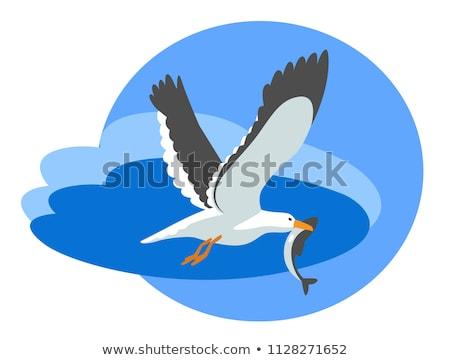 Seagull and Fish Stock photo © fouroaks