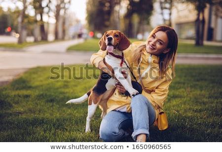 güzel · tazı · köpek · kız · kahverengi - stok fotoğraf © lithian
