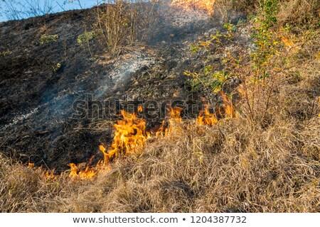 Campos vegetação pôr do sol grama natureza paisagem Foto stock © carloscastilla