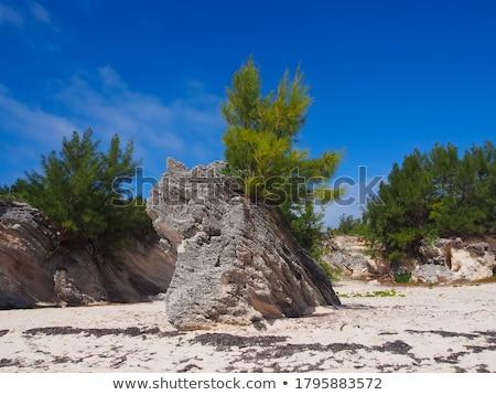 çam büyüyen plaj çam ağacı sahil Yunanistan Stok fotoğraf © Mps197