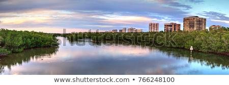 Сток-фото: болото · штопор · Флорида · растений · природного