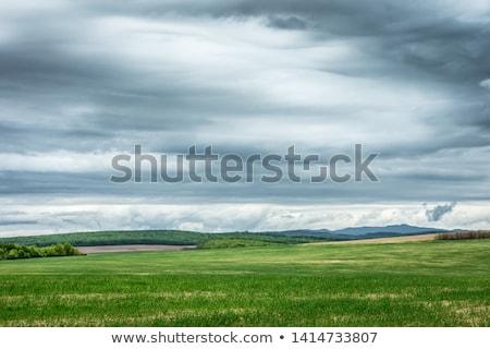dark clouds over fields in spring Stock photo © meinzahn