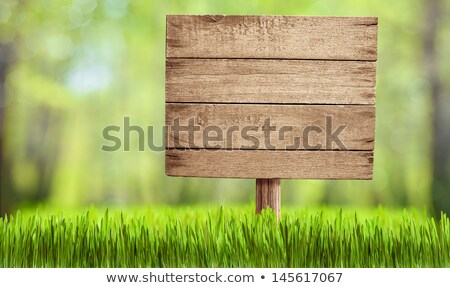 Forest Blank Sign Stock photo © Lightsource