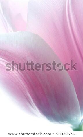Rose tulipes réflexion eau fleurs mariage Photo stock © zapatrzony