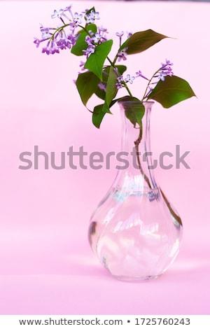 Fioletowy liliowy oddziału Błękitne niebo niebo drzewo Zdjęcia stock © vapi