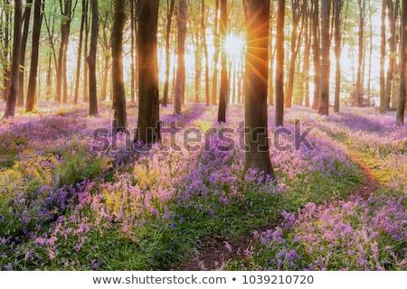 Primavera floresta paisagem prímula flores fundo Foto stock © Kotenko