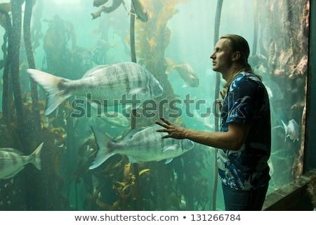 Junger Mann schauen Aquarium hinter Kamera Natur Stock foto © wavebreak_media
