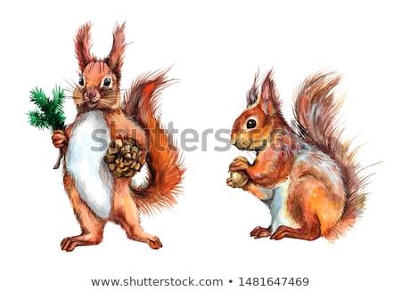 Funny wiewiórki christmas ilustracja lasu śniegu Zdjęcia stock © adrenalina