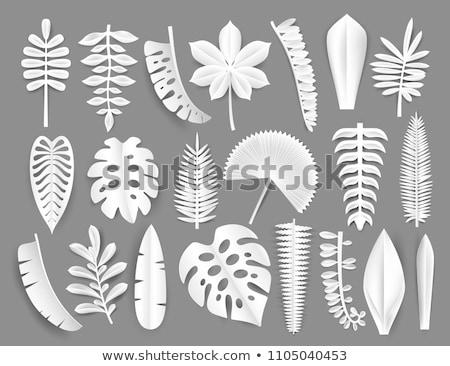 witte · papier · bladeren · sjabloon · schaduwen · grijs - stockfoto © limbi007