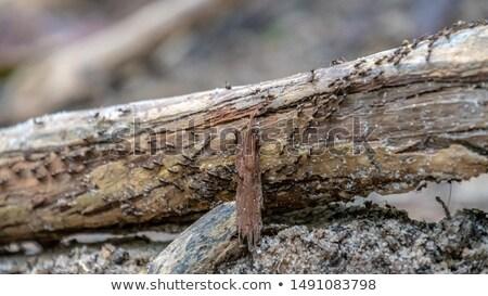 Tropicales figura Forrest piedra forestales detalle Foto stock © Klinker
