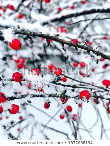 Freshly fallen snow  Stock photo © olykaynen