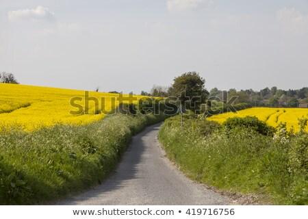 фермер · полях · вождения · трактора · плодородный · почвы - Сток-фото © meinzahn