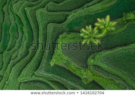 Stock fotó: Tájkép · fotó · rizs · falu · Kína · természet