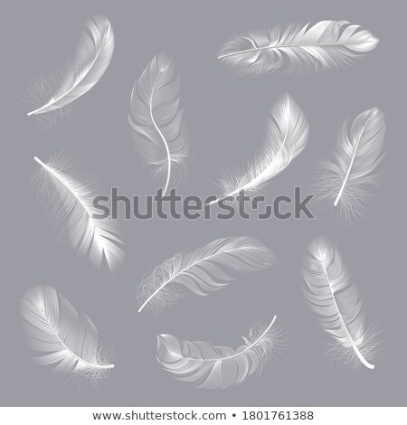 Falling bird Stock photo © bluering
