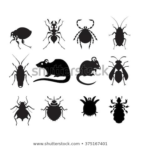 домашнее хозяйство набор иконки таракан Пиксели идеальный Сток-фото © jossdiim