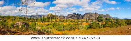 Famous Cuba farmland tobacco area, Valley de Vinales, Cuba.  Stock photo © CaptureLight