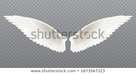 szett · klasszikus · vektor · szárnyak · izolált · fehér - stock fotó © krisdog