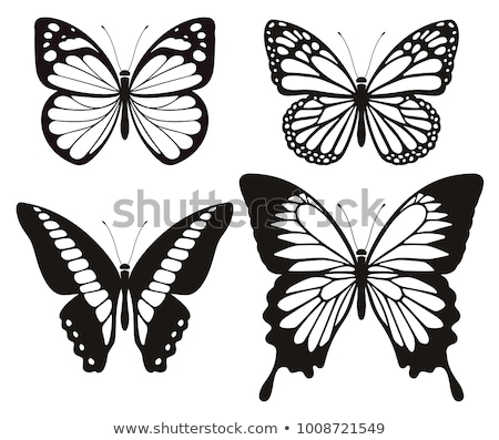 silhouette with butterfly wings Stock photo © Olena