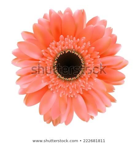 Photo stock: Grand · groupe · printemps · Daisy · fleurs · herbe