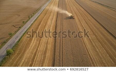 colheita · milho · campo · trabalhando · plantação - foto stock © stevanovicigor