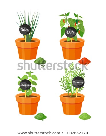 Chives in Pot and Table Powder Vector Illustration Stock photo © robuart