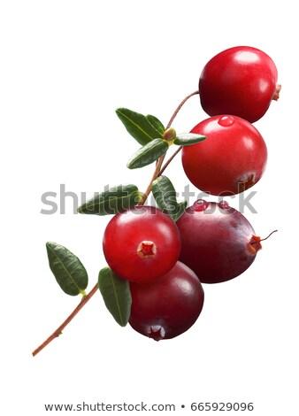 Cranberry branch (Vaccinium oxycoccus), clipping path Stock photo © maxsol7