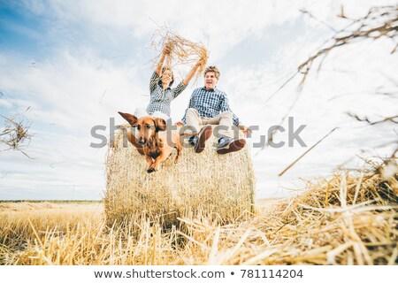 Pareja perro heno campo de trigo Foto stock © ElenaBatkova