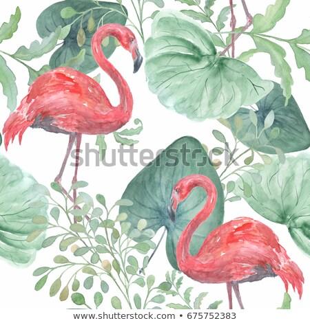 Rosa flamingo vermelho tropical flores verão Foto stock © Artspace