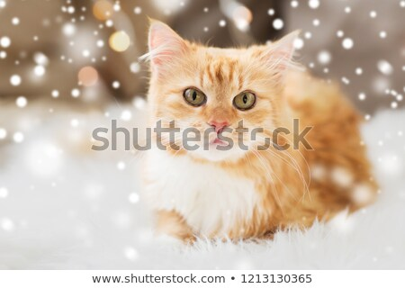 red tabby cat lying on sheepskin at home over snow Stock photo © dolgachov