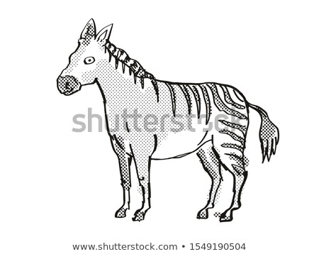 Hagerman Horse Extinct  North American Wildlife Cartoon Drawing Stock photo © patrimonio