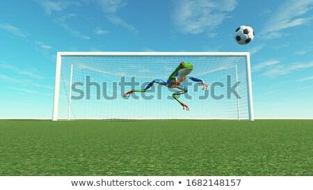 вратарь лягушка зеленый играет Футбол животного Сток-фото © orla